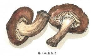 shigaku_02
